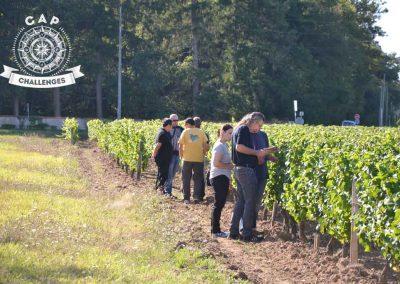 a-la-recherche-dindices-dans-les-vignes