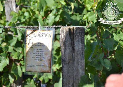 un-indice-dans-les-vignes
